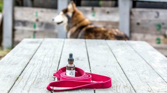 cbd oils for pets
